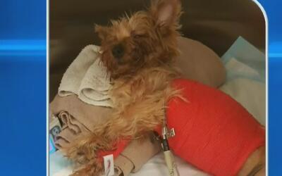 Policía busca a una persona de interés por el ataque a una mascota en un...