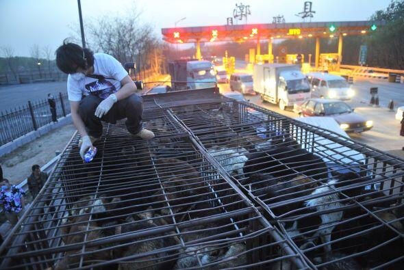 Los cachorros provenían de la provincia de Henan, en el centro del país.