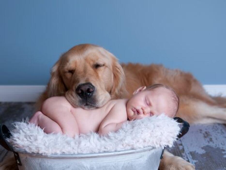 Tal vez ya te habías dado cuenta pero tener un perro disminuye el dolor...
