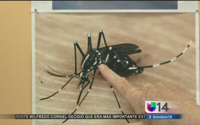 Autoridades del condado Santa Clara prevén un aumento de mosquitos en el...