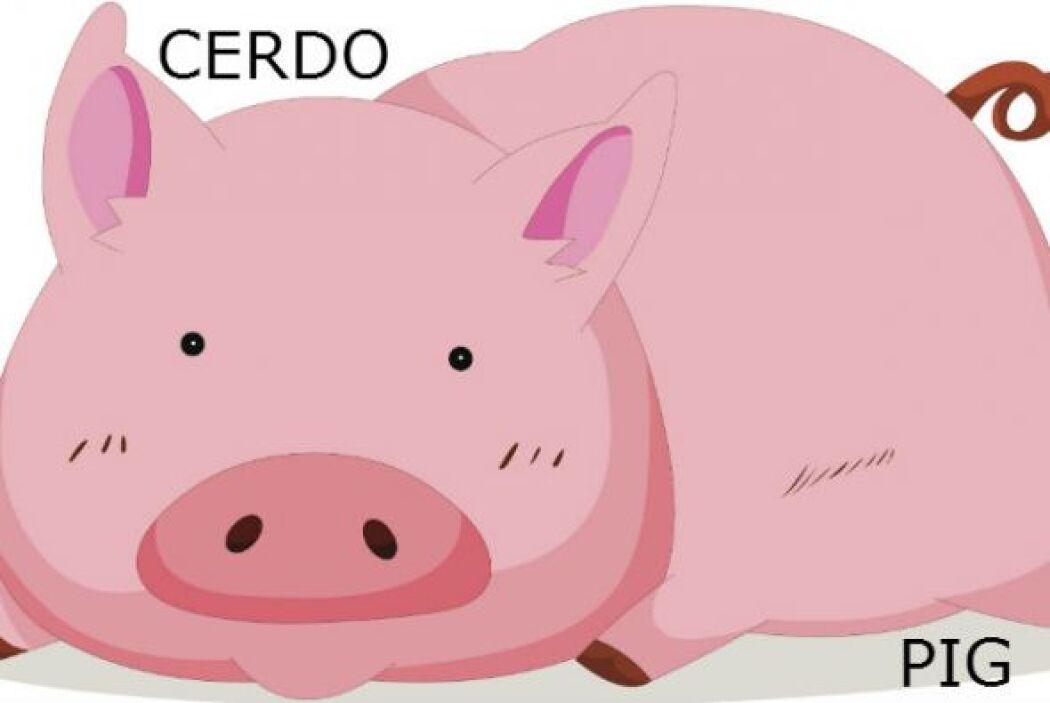 CERDO - PIG