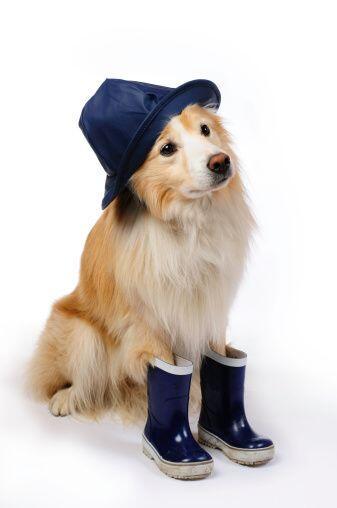 Si el pelaje de tu perro es muy fino o es corto, es imprescindible que s...