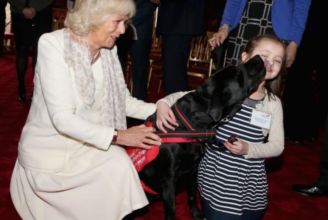La Duquesa y sus invitados observaron como los perros detectaban en paci...