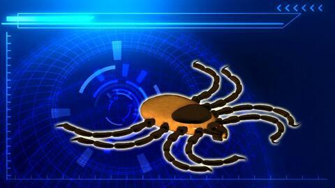 Expertos en alerta por posible propagación de un virus transmitido por g...