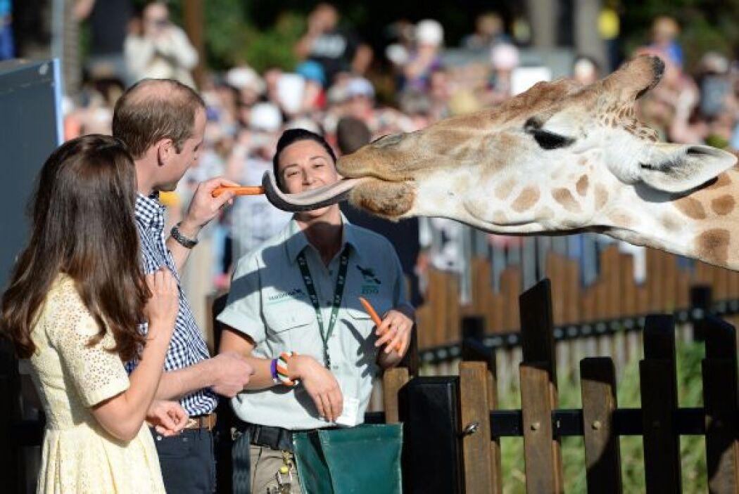 Durante su recorrido pudo estar cerca de una amigable jirafa.