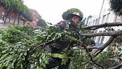 Un bombero de San Francisco remueve las ramas de uno de los cientos de á...