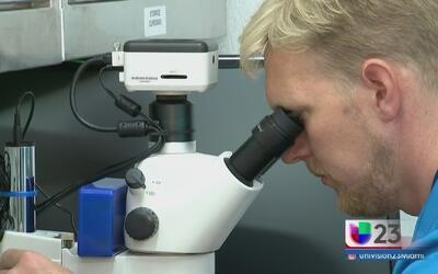 La batalla a favor y en contra de los mosquitos con ADN modificado en lo...