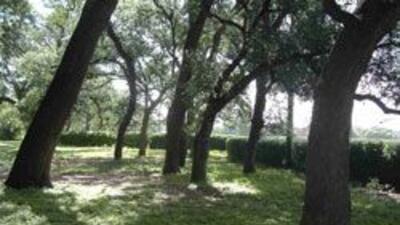 Foto cortesía de IPSA: Los árboles nogaleros donde los niños de aproxima...