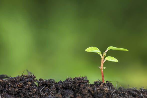 También se asocia con la ecología y nuestra responsabilida...