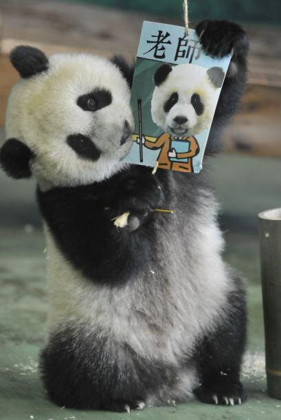 El zoológico de Taipéi es la casa de esta pequeña que cada día conquista...