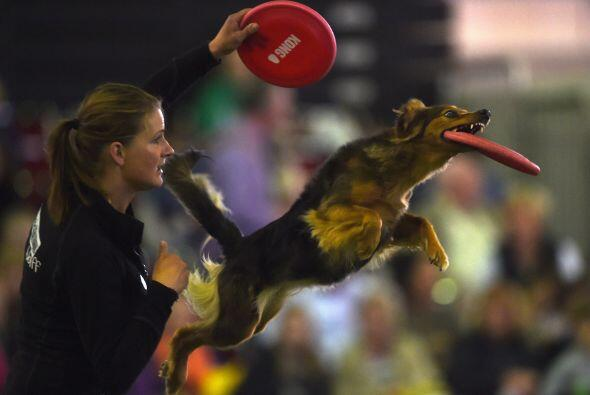 Esta competencia busca que las mascotas logren sus mejores trucos.