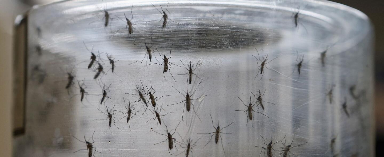El virus del Zika ataca una de la zonas más turísticas de Florida
