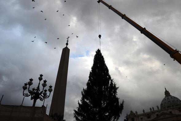 Una vez adornado el árbol será iluminado durante una ceremonia la tarde...