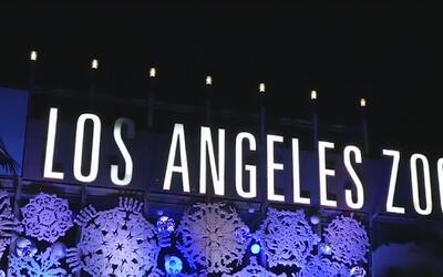 Zoológico de Los Ángeles cumple 50 años de funcionamiento
