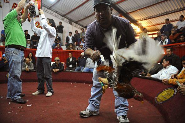 El líder de la Asociación de Galleros del Ecuador, Galo Vayas, asegura q...