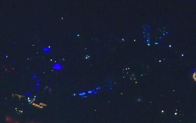 El 'bosque de luces encantado' llega al sur de California