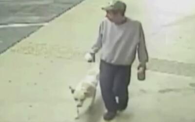 La policía en Irving busca a un sujeto que apuñaló a un perro y lo aband...