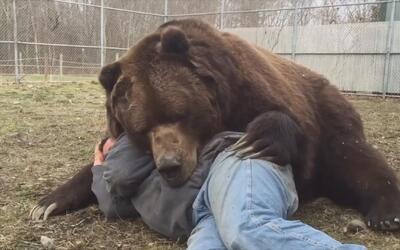 Literalmente un abrazo de oso