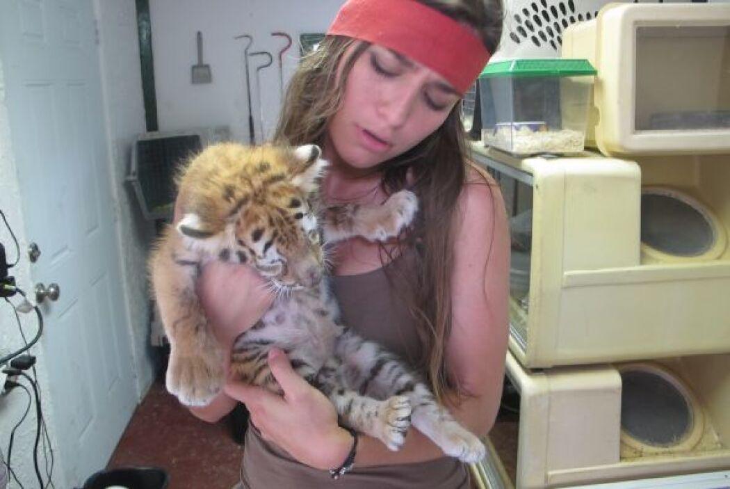 Caipiriña pudo cargar a un cachorro de tigre que le causó mucha ternura.