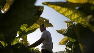 Un inmigrante, en un campo en EEUU: el objetivo es atravesar México para...