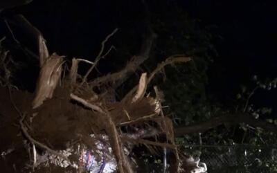 'Dallas en un Minuto': fuertes tormentas de este jueves dejaron árboles...