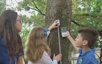 La importancia de la temperatura y la humedad en los árboles