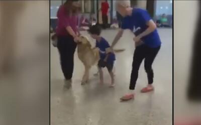 Niño autista viajó a Estados Unidos para conocer a un perro que ayuda a...