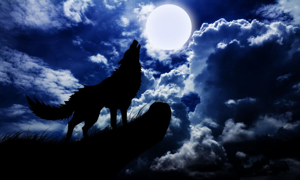 Meaning Of Dogs Barking At Night
