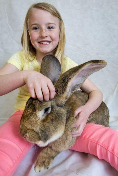 Aunque probablemente a estos conejos no les importa mucho quién g...