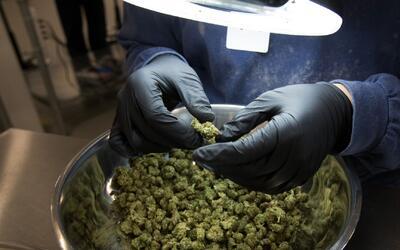 ¿Quiénes pueden recibir la marihuana medicinal en Florida?