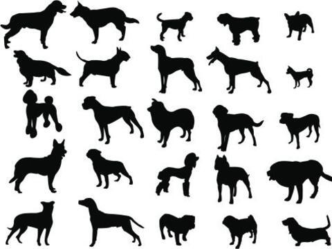 Un estudio estadístico basado en licencias caninas otorgadas por...