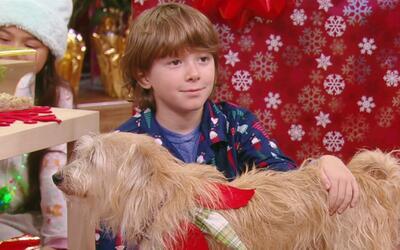 ¡Regalitos de cuatro patas! Por qué pedirle a Santa Claus una mascota en...