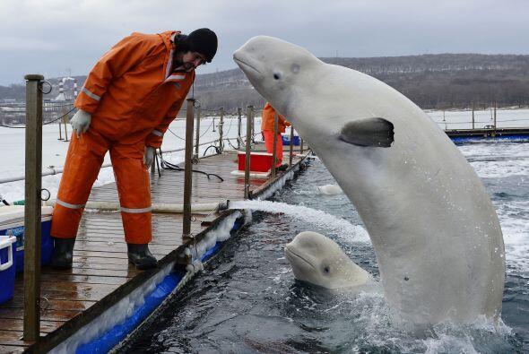 Estos mamíferos se pusieron contentos cuando comenzaron a aliment...