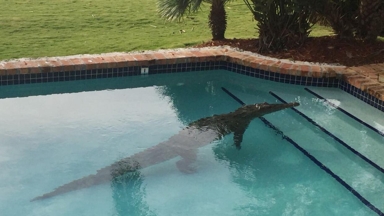 Esta foto proveída por el alguacil del condado Monroe, en Florida...