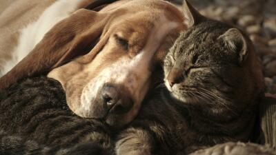 perros gatos