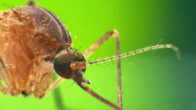 salud mosquito dengue