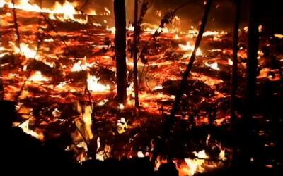 Volcán Kilauea hace erupción y termina con bosque