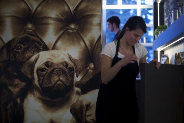 Con esta idea, la creadora se encomendó la misión de ofrecer a los canin...