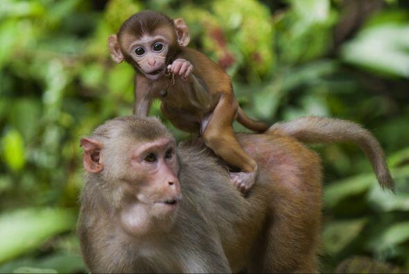 Una madre con su bebé siempre será un motivo de alegría, pero la ternura...