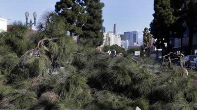 Un gran árbol derribado por fuertes vientos en Los Ángeles.