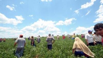 Trabajadortes agrícolas en un campo de California.