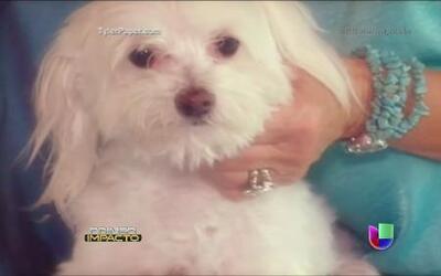 Tras seis años de ausencia, fue recuperada una mascota