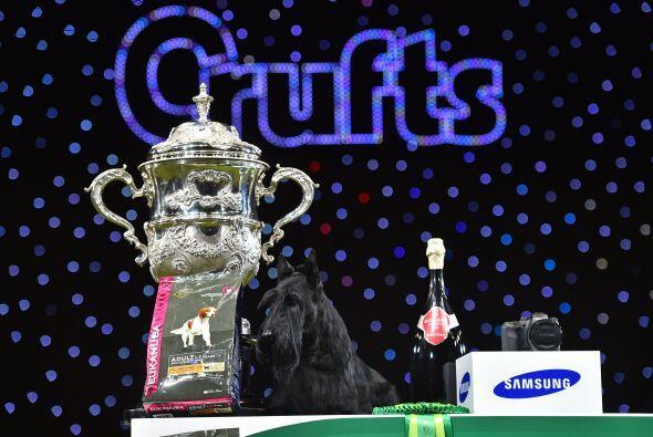 Knopa ganó en la polémica versión 2015 de Crufts, en la que se cree que...