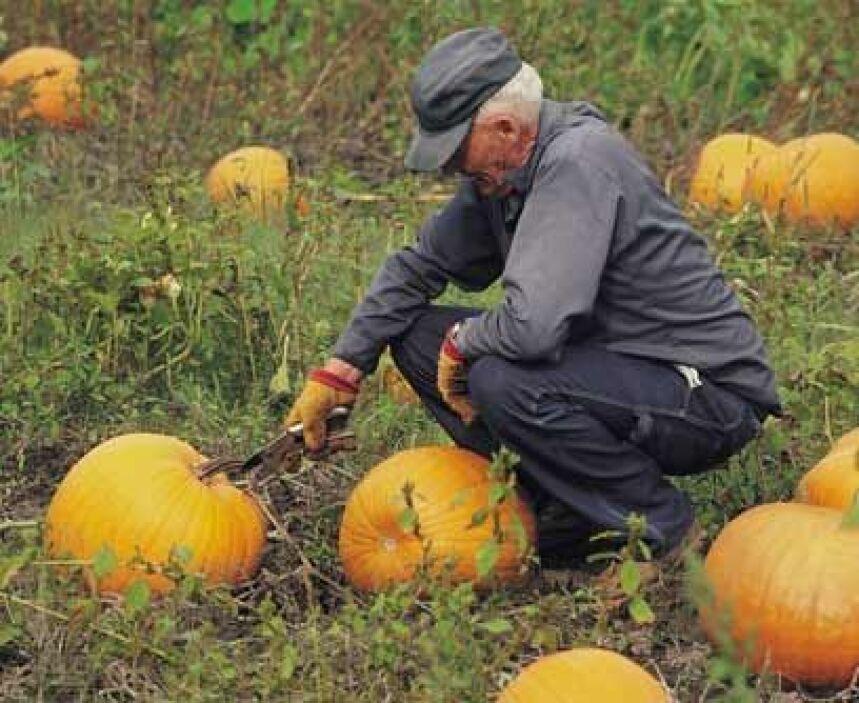 Pharmer (mezcla de granjero y farmacéutico) La modificación genética es...