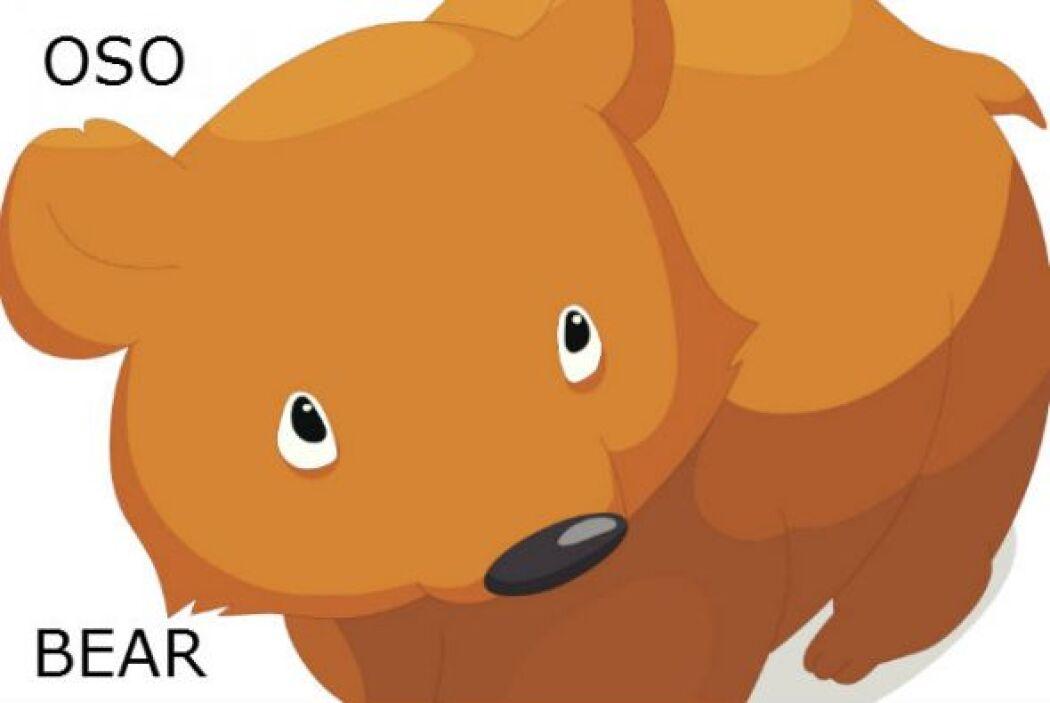 OSO - BEAR