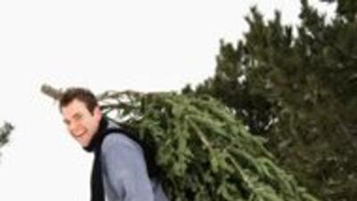 Recicla tu arbolito de Navidad 427fe5cd23ac4523a2e73075f53c96d7.jpg