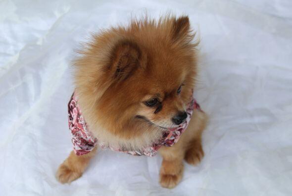 Tu mascota se sentirá muy cómoda y sofisticada,  Escoge los colores que...