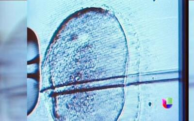 Polémica por clonación exitosa de células madre en EEUU