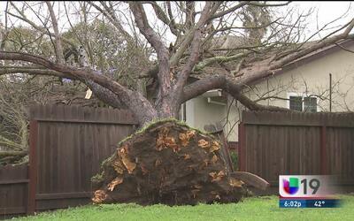 Piden revisar árboles para evitar tragedias por las lluvias