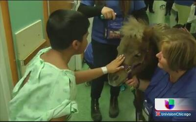 Ponies visitan niños enfermos en hospital Rush